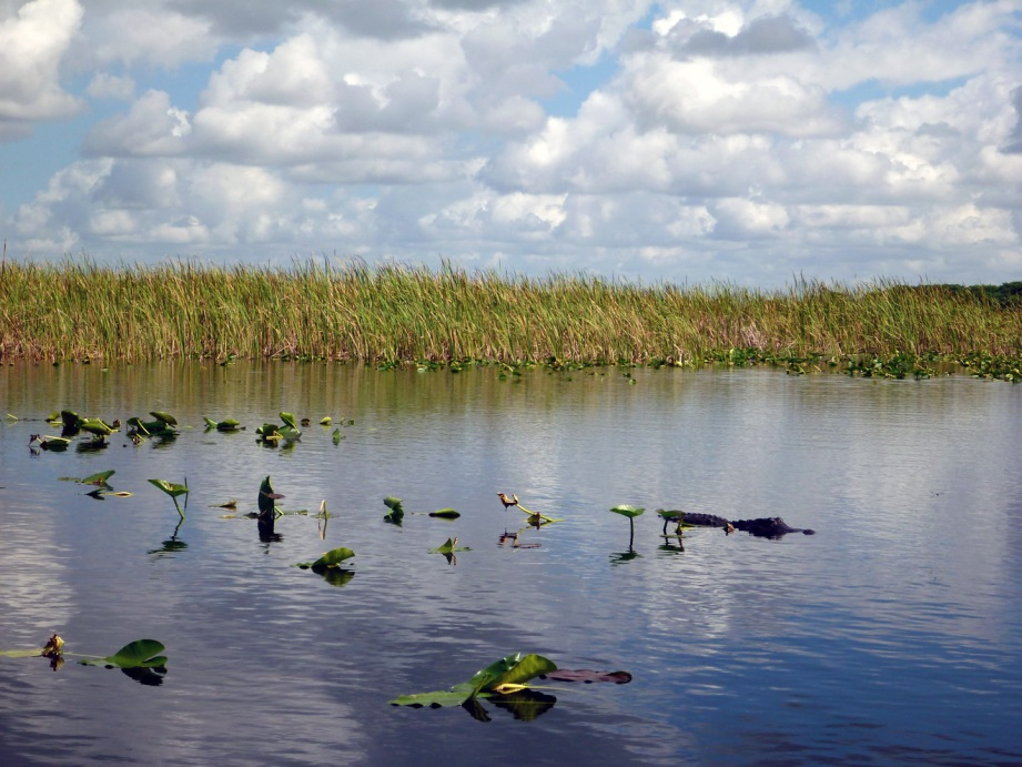 Everglades city airboat rides
